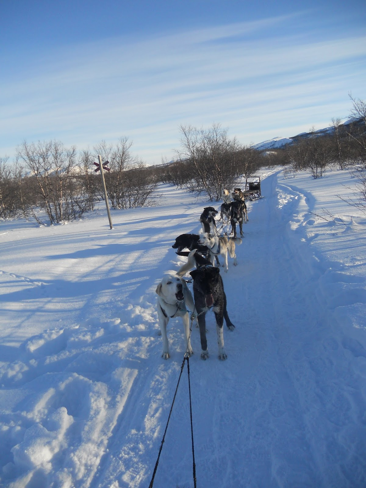 Sledging With Huskies In Swedish Lapland
