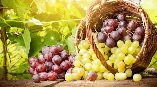 Manfaat Buah Anggur untuk Darah Tinggi