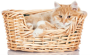 A basket can make the perfect cat bed.