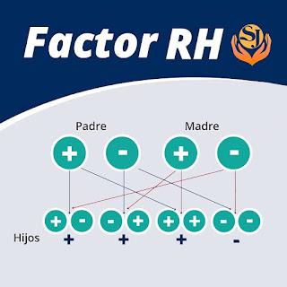 factor RH negativo