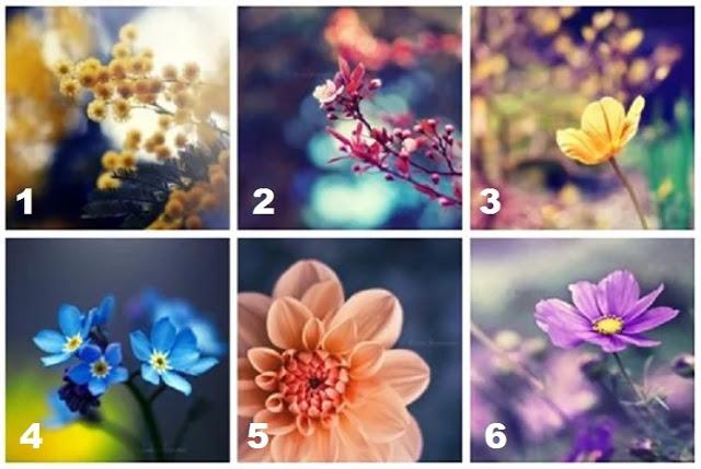Выберите цветок, чтобы узнать, что говорит вам, ваш внутренний голос