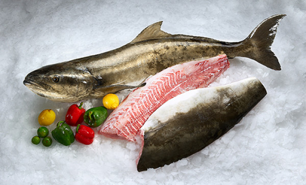 Purchase salmon fish for health benefit from fresh fish for Fresh fish store