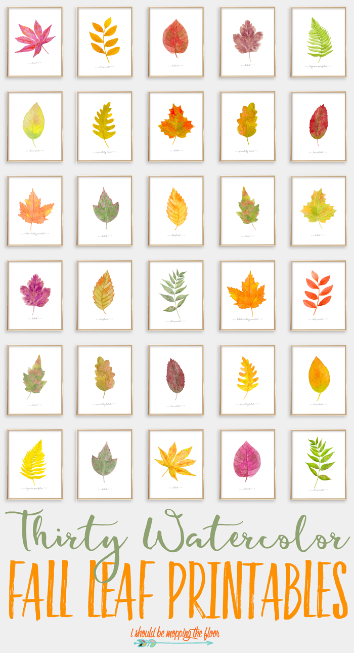 graphic relating to Printable Fall Leaf known as 30 Watercolor Tumble Leaf Printables i ought to be mopping the