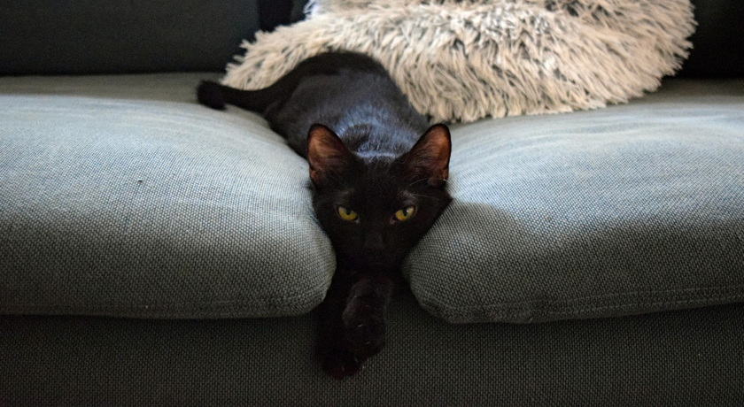 pet sitting hungary