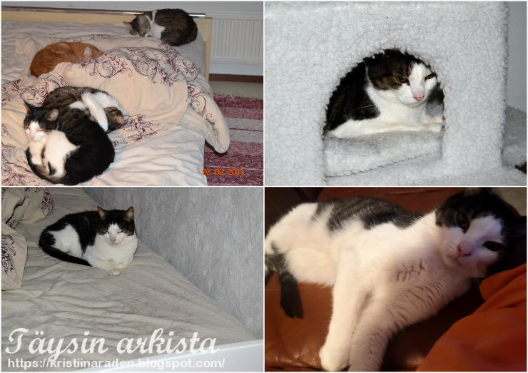 Kissan nukkumapaikat