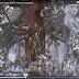 Βίντεο: Αυτό είναι το εντυπωσιακό γιγαντιαίο δέντρο σεκόγια 3.200 ετών