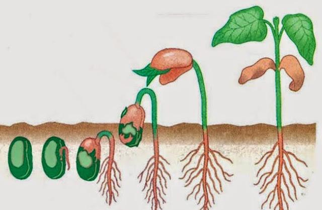 image: Faktor yang mempengaruhi perkembangan tumbuhan dan hewan
