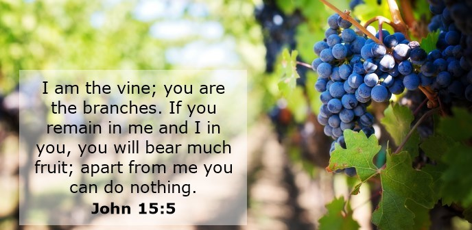 I am the vine; you are the branches. If you remain in me and I in you, you will bear much fruit; apart from me you can do nothing.