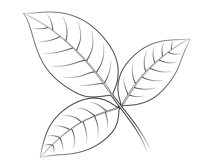 Gambar garis daun mawar