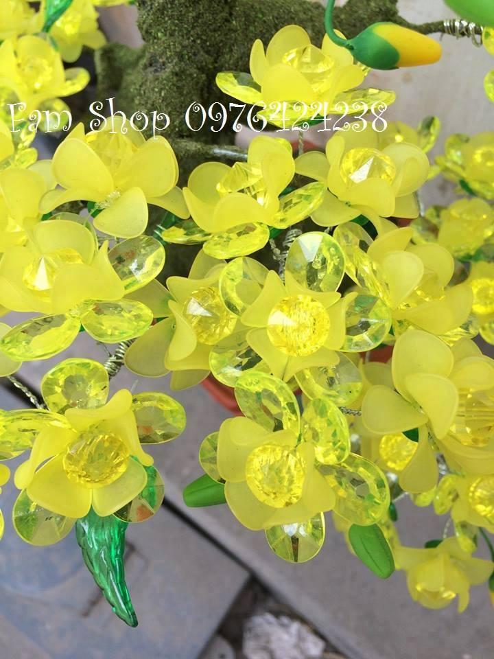 Canh hoa mai lam goc bonsai mai dao o Chuong Mi