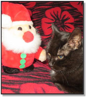 tierische Weihnacht