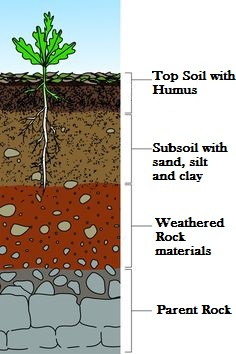 Notes of ch 2 land soil water natural vegetation and for Soil resources definition