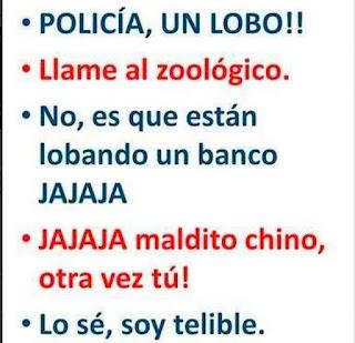 policia un lobo, llame al zoologico