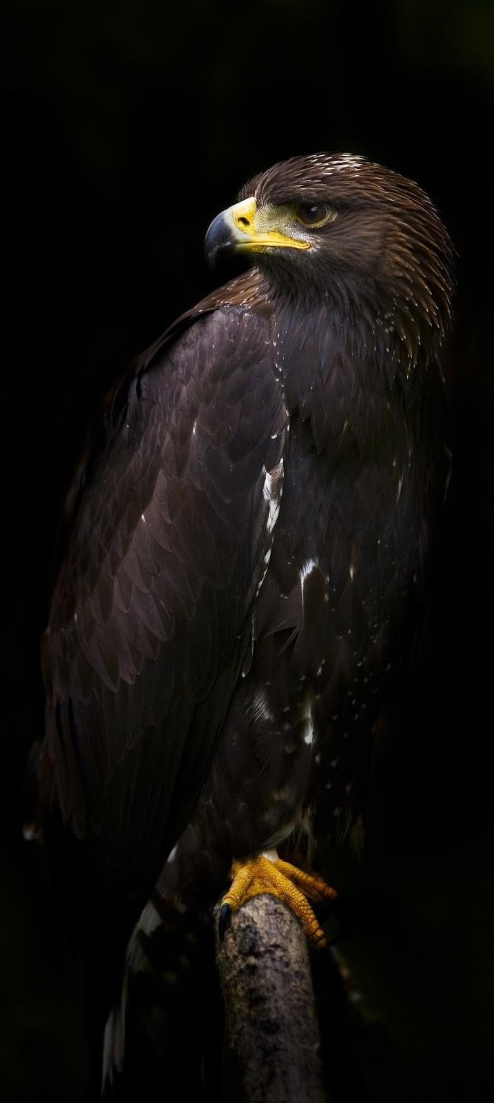 Majestic eagle.