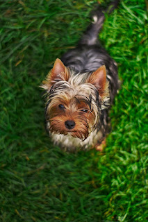 10 Best dog sweet images for whatsapp profile | Dog images for whatsapp dp