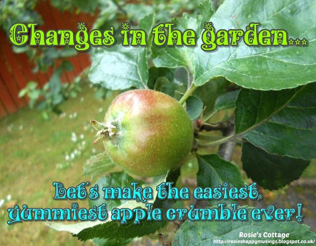 Changes In The Garden: The Apple Blossom Has Been replaced By Apples, While We Wait For Harvest, To The Pantry And Let's Make Some Apple Crumble!