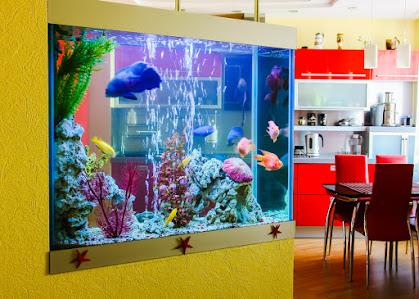 How to Have a Home Aquarium