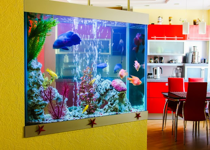How to Create an Aquarium in Your Home