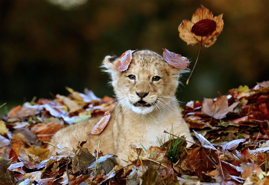 Extreem Klein Geluk: Dieren in de herfst #KG63