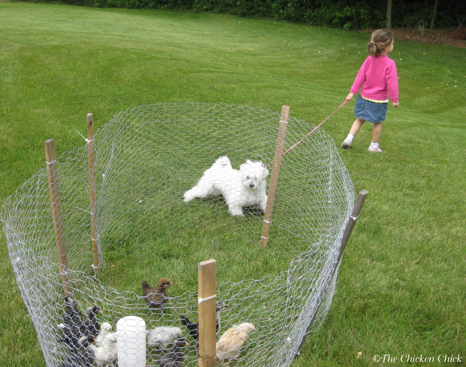 Coop Security Hardware Cloth Vs Chicken Wire The