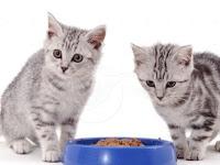 Jangan Usir Kucing yang Mendekatimu Saat Sedang Makan. Ini Penjelasannya