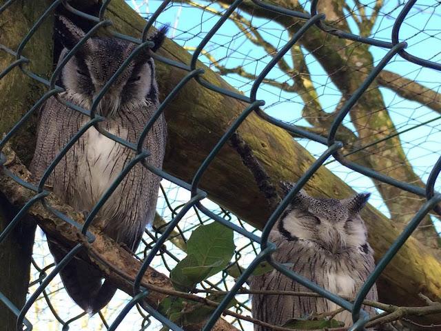 Owls paradise park