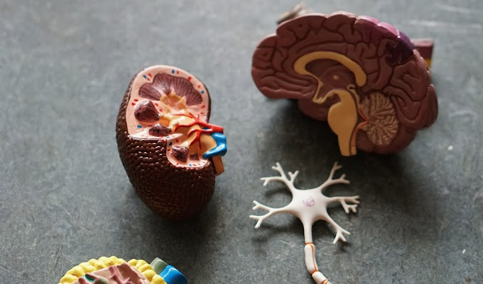 6 Habits That Damage Your Kidneys