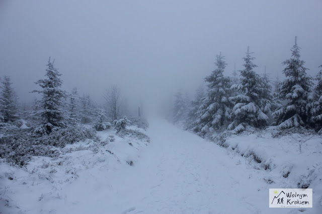 mgla w gorach zima
