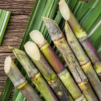 ऊस, Sugar cane fruits name in Marathi