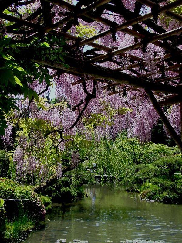 Parks Arboretum, Japanese Gardens Landscape, Washington