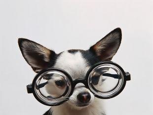 veterinaria online miopia en perros viejos