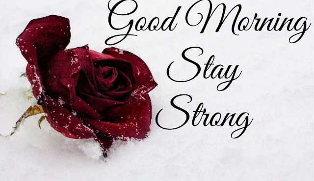 Good Morning Stay Strong Red Rose Image