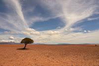 Barren Tree - Photo by Wolfgang Hasselmann on Unsplash