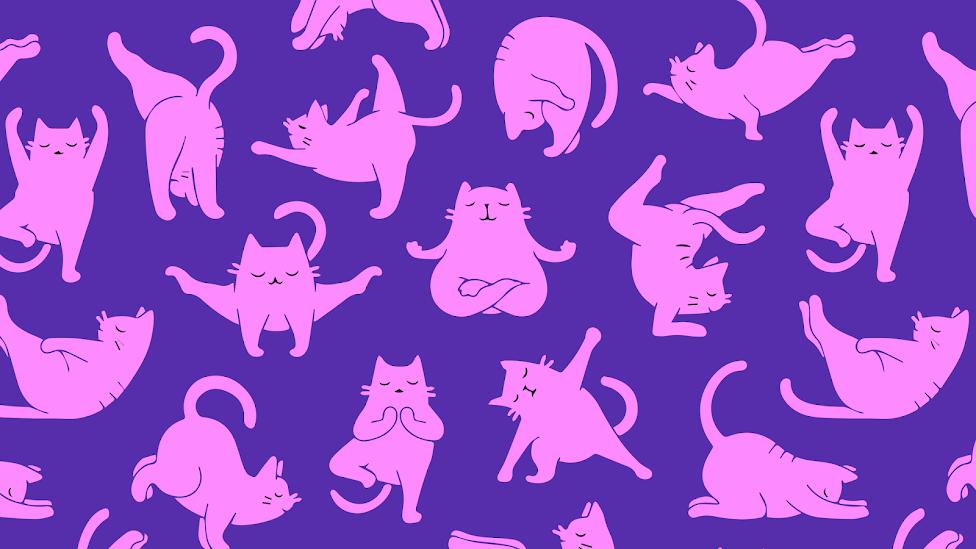 Wallpaper 4k Yoga Cat Pattern