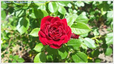 Madrid; Viagem Europa; Turismo na Espanha; Parque del Oeste; Rosaleda; Rose Garden Madrid