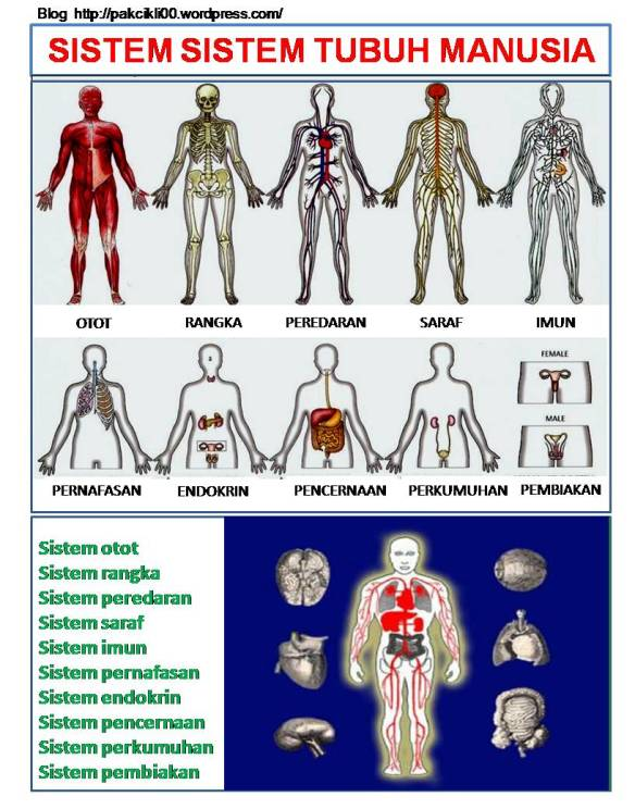 101 Fakta Tubuh Badan Manusia