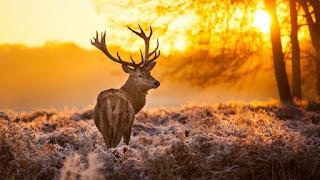صور غزال في الطبيعة