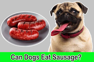 can dogs eat sausage, can dogs have sausage, dog eating sausage
