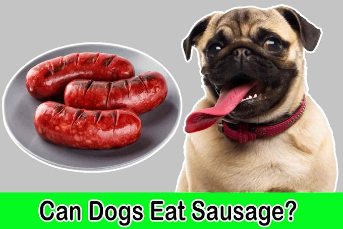 [2021] Can Dogs Eat Sausage | Is Sausage Good for Dogs