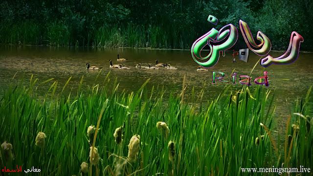 معنى اسم رياض وصفات حامل و حاملة هذا الاسم Riad