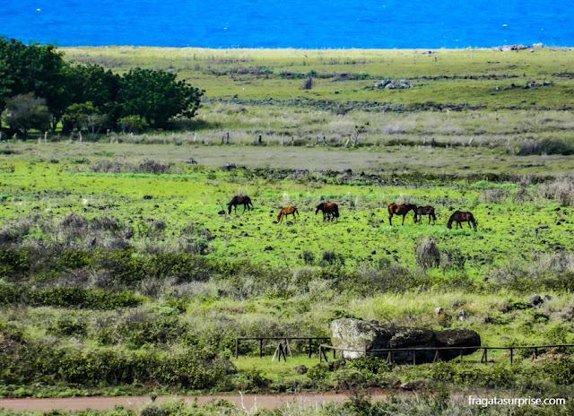 Cavalos selvagens na Ilha de Páscoa