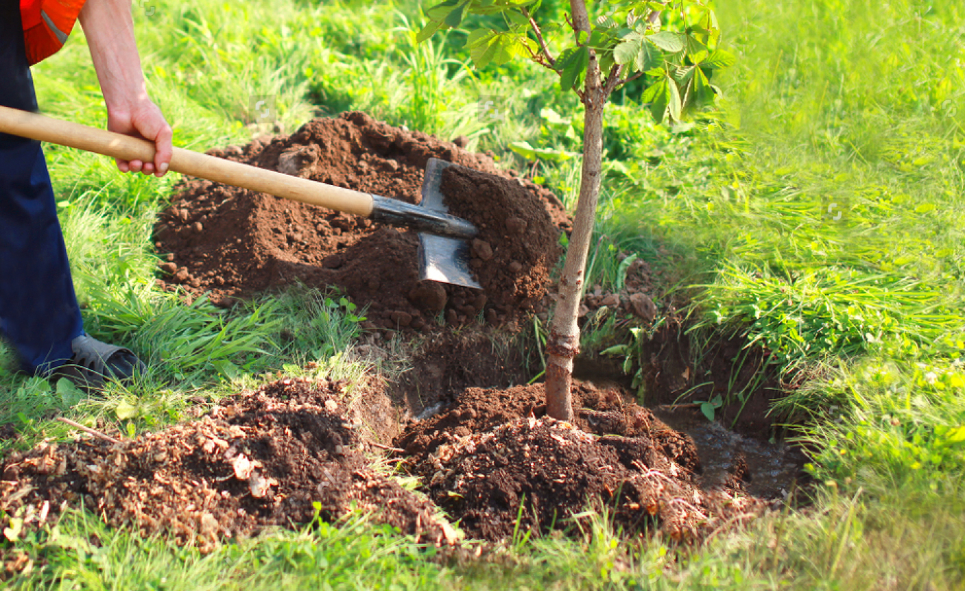 comment planter les arbres fruitiers conseils de. Black Bedroom Furniture Sets. Home Design Ideas