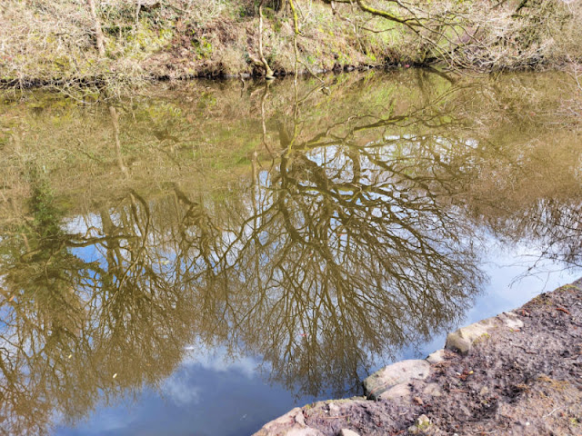 A reflected tree in the water of the canal