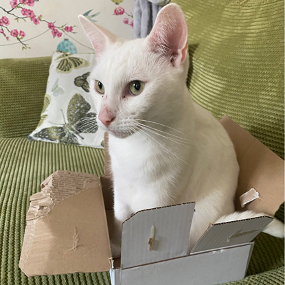 white cat sat in small cardboard box on green sofa