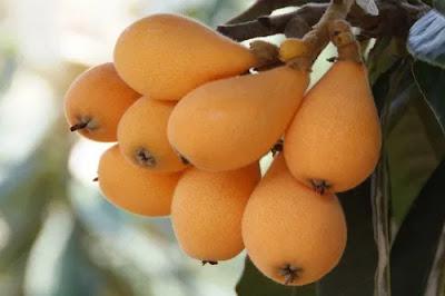 Loquat - Loquat in Hindi