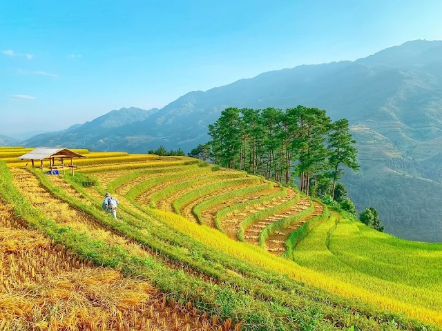 Check-in the Northwest in the season of rice ripening at 4 famous locations