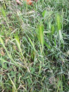chasse au trésor sensorielle photo herbe sortie en famille ludique