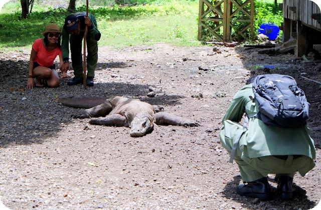 Foto Bersama Komodo di Pulau Komodo