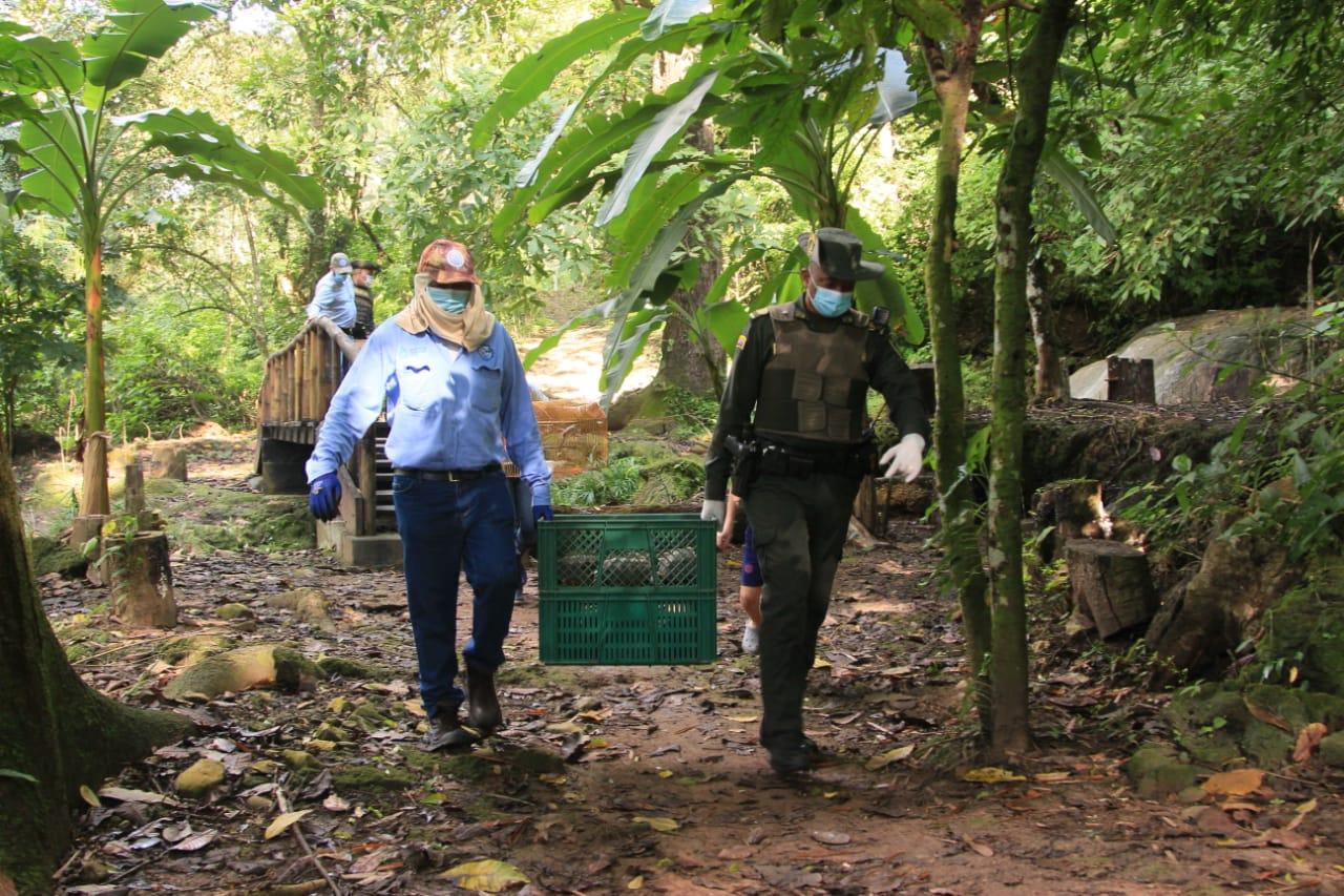hoyennoticia.com, Policía y Corpocesar regresaron a su habitad 31 especies silvestres