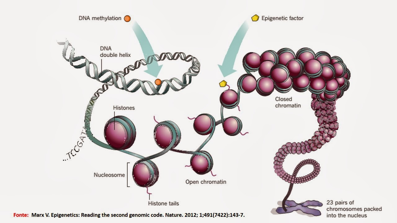 epigenetics research paper Home essays epigenetics paper  epigenetics:  the rules that are studied and understood through this research paper are those of dna methylation and chromatin.